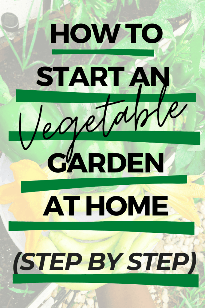 EASY VEGETABLE GARDEN FOR BEGINNERS