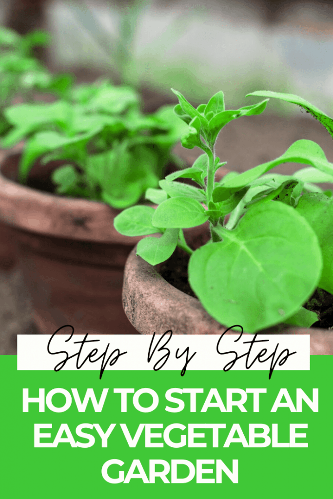 HOW TO START A SMALL VEGETABLE GARDEN FOR BEGINNERS